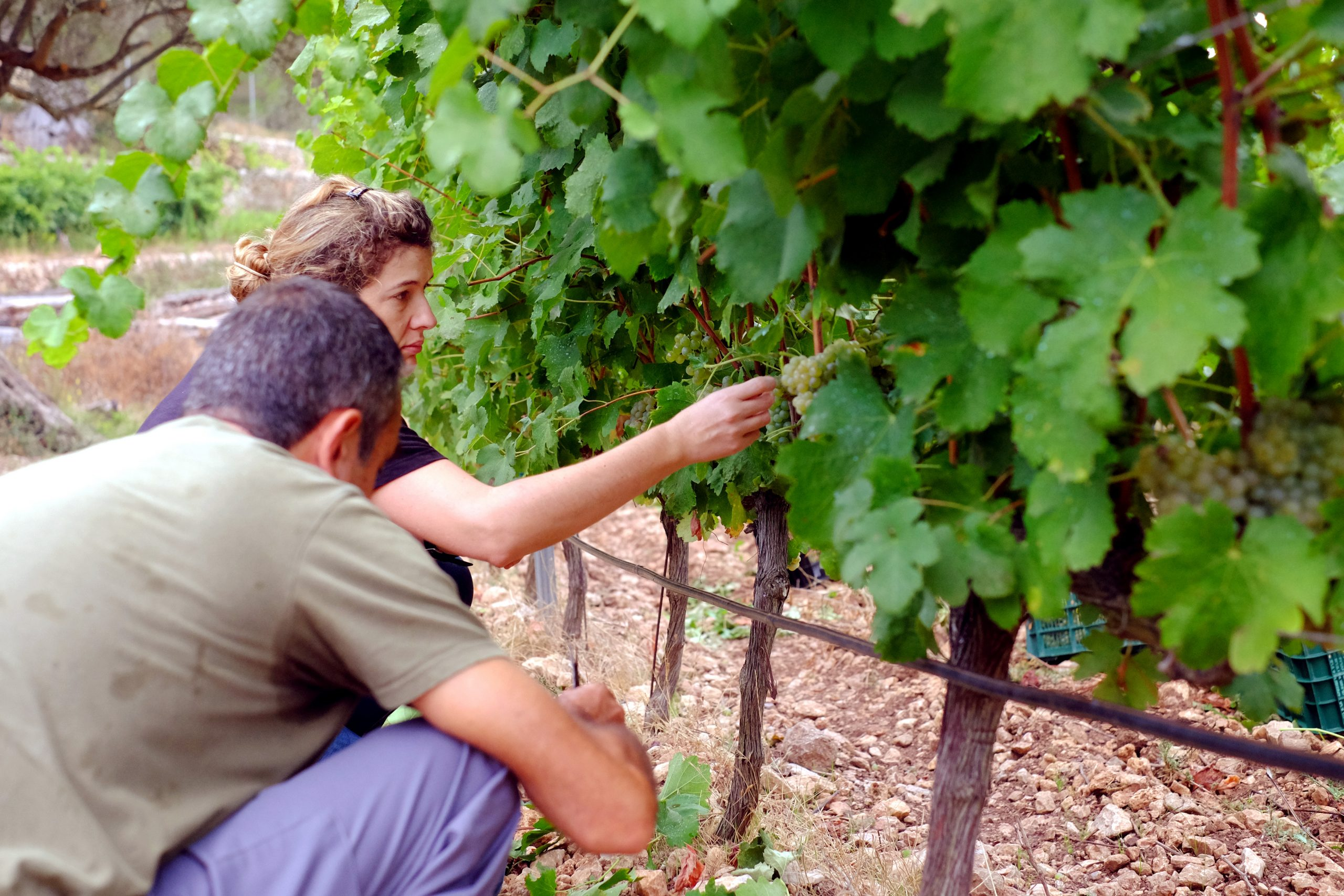 Field notebook, we know the work of our Winemaker