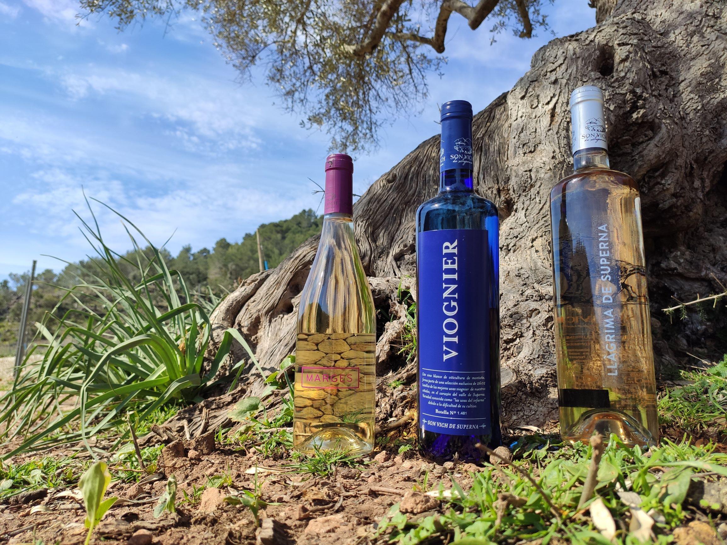 Nueva añada de los vinos jóvenes de la Bodega Son Vich de Superna